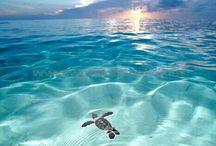 Bebé tortuga marina