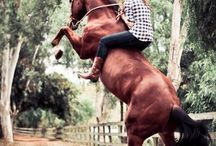 Horseback riding bareback! / Look Mom, No Saddle!