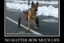 Pets in wheelchairs. / Pets in wheelchair and how they get them and use them. / by Judy Krubsack