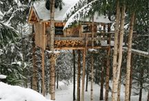 Treehouses / by Tracy Dewar