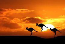 A u s s i e ~ C u t i e s / En Australia encontrarás animales únicos en el mundo que harán que te enamores aún más el país!!