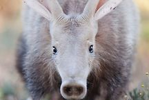 Insects & Animals / It's about insects, ants, anteaters. And other animals I like.