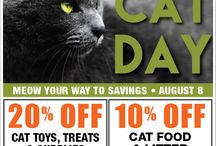 World Cat Day / National Cat Day was founded as a way to bring awareness to the number of homeless cats. ... in 2002 by the International Fund for Animal Welfare.