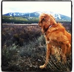 Tahoe Dogs / by Constellation at Northstar