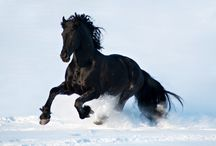 Majestic Equine - Pure Beauty / I am absolutely in awe of these magnificent animals! / by Organizing Czyk - Lisa Brylczyk
