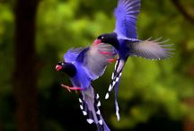BIRDS of COLORS