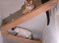 cats | chats / Ideas to make cats comfortable at home | Idées pour le confort du chat