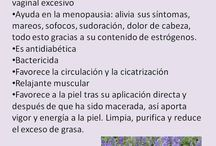 hierbas y semillas saludables