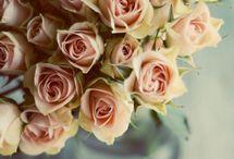 Flower/ blumen