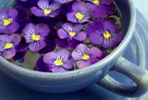 violets and anything purple I like... / by Sabrina and Todd Farber