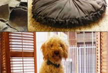 If I ever get a dog.  / by Kristy's Health Revolution