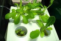 Hydroponics / Hydroponics the new and latest technique in agriculture to grow plants organically