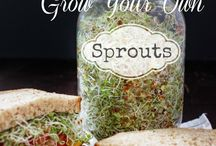 Foodies: Grow your own / by Sarah Kelly