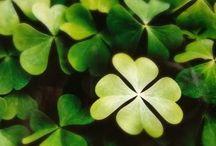 Luck of the IRISH! / by Diane Lippert
