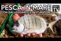 Pesca In MareT