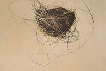 croquis nid