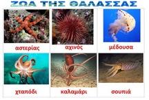 ζωα της θαλασσας