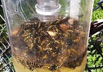 insetos maus