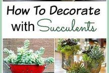 Идеи для посадки растений