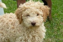 Cute pups / I like pups
