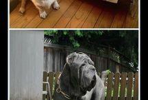 Perros de raza......