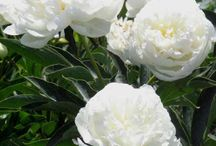 flowers/wedding / by Jackie Dacek