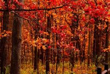 herfst plaatjes