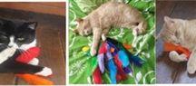 THE fuzzie HAVEN - Cat