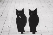 Black cats / From one black cat lover to another, a curated board all about black cats. #blackcats / by elle.paisley designs