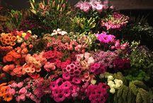 Roosmarijn / Bloemenwinkel