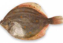 RYBY -  FISH
