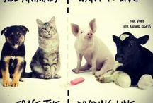 Tutti gli animali VOGLIONO vivere