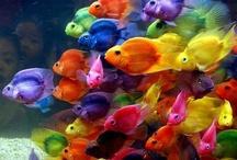 рыбешки