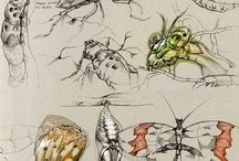 Sketch insected