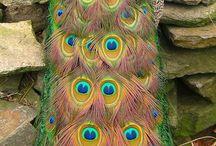 Beautiful species / by Berenice McKinnis