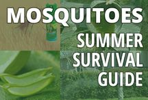 Summer mosquito survival guide