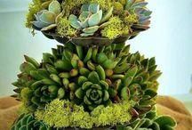 växtgäri-inspo