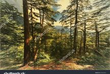Digital Photo's: nature background / Pleasant Day for travel health trail