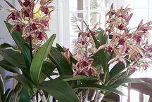 fleurs et orchidées