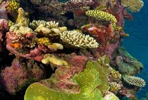 Ocean corals and reefs / under the sea
