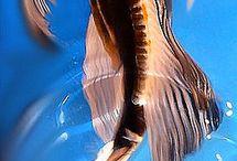 Fish / Fish