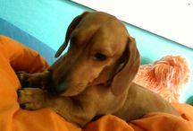 my grand dog / by Gayle Lawhorne