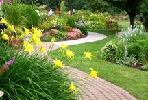 Daylilies we love / by Sabrina and Todd Farber