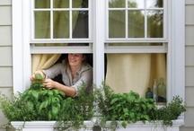 garden: ideas / ogród: pomysły