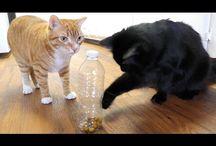 Cat ideas