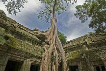 Cambodia! / by Lara Collier