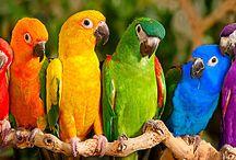 Many colors / by Theresa Dezan