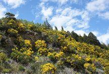 San Martín de los Andes / Fotos de San Martín de los Andes. Visita la Patagonia Argentina y www.LiveArgentina,com
