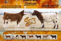 Livestock Sale Ad Inspiration