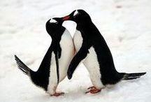 Riendo de pingüinos